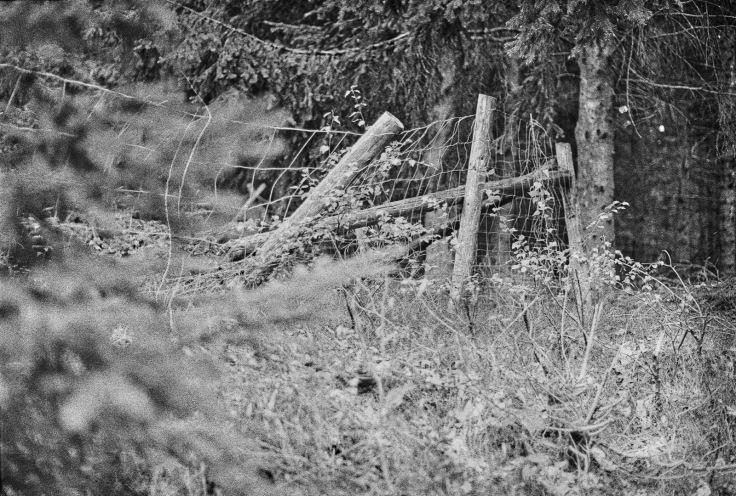 190502 - Pentax Spotmatic SP - Kosmo Foto 100 (36)